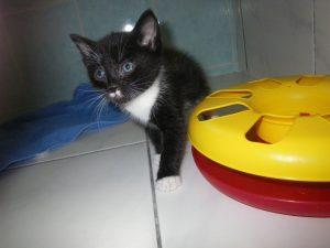 Merlin (14)